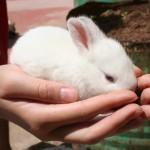 """Pierwsze to""""królik doświadczalny"""""""